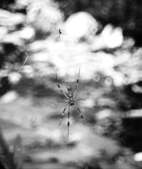 Spider Nature Blackandwhite Enjoying Life