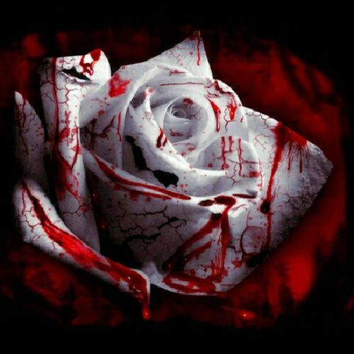 I Showed  My Friend this and she said how does a rose bleed i was like a the same way a heart does through pain EMO girl DONT CARE AND YOU KNOW THE REST x_x