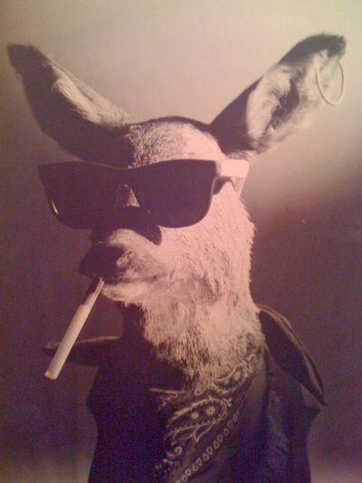 Wildthing dear earings wild life Sunglasses Portrait Rockabilly Time :D