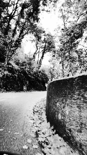 The Road And Trees Hdr Photography HDR Mode Monochrome Blackandwhite Photography Black And White Outdoor Photography Showcase: November Monochrome Photography Week On Eyeem Eyeem Photography Outdoors Tree Branches Roads