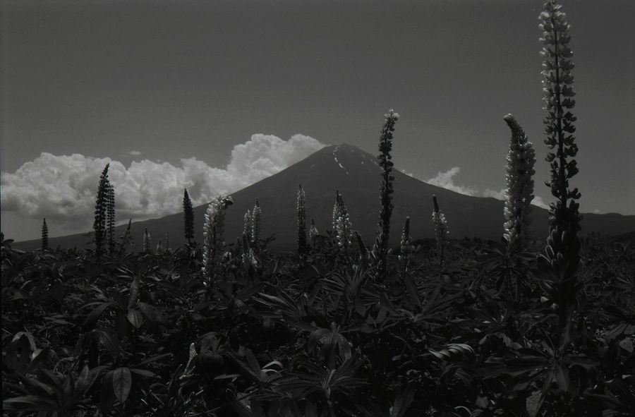 Japan Japon Black And White B&W✨ B&w Photography B&W Collections B&w Photo B&w Black & White black and white friday EyeEm Best Shots - Black + White Monochromatic Monochrome monochrome photography Blanc Et Noir EyeEm Best Shots EyeEmNewHere Mt.Fuji Barbed Wire No People Growth Outdoors Grass Night