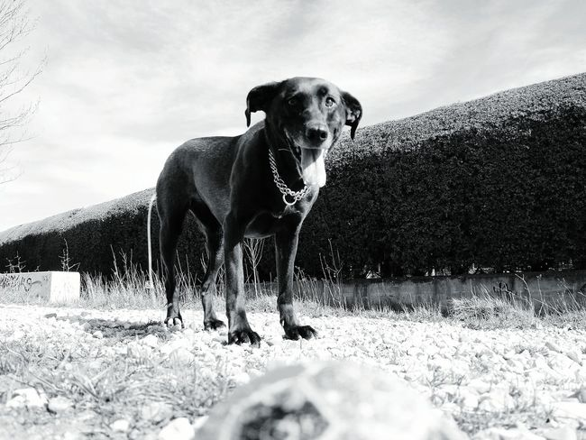 Burgos -España- Burgos España🇪🇸 THESE Are My Friends Blackandwhite Blackandwhite Photography Black And White I Love My Dog Dog Life Dog❤ Dog Love Dogs