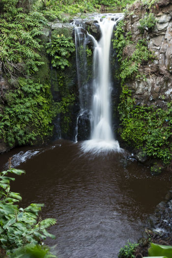 Azores EyeEm Nature Lover EyeEmNewHere Portugal São Jorge Beauty In Nature Day Forest Motion Nature No People Outdoors Plant Scenics Tree Water Waterfall