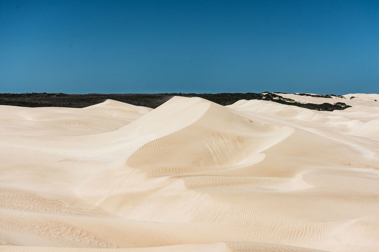 Beach sand dunes under clear blue sky Desert Sand Sky Arid Climate Scenics - Nature Tranquil Scene Clear Sky Sand Dune Land Tranquility Landscape Environment Climate Non-urban Scene Beauty In Nature Copy Space Nature No People Day Blue Outdoors