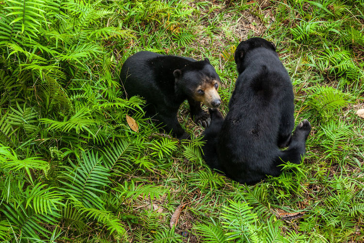 High angle view of two dogs on field