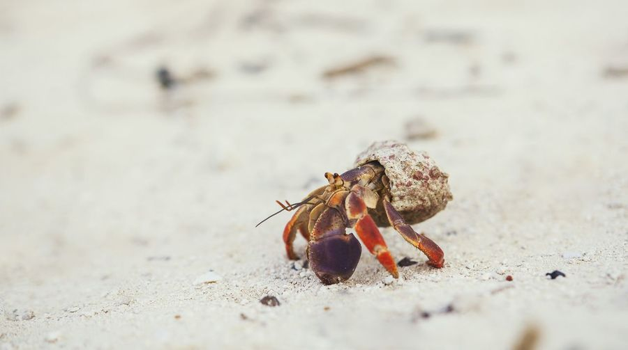 Close-up of a crab on sand