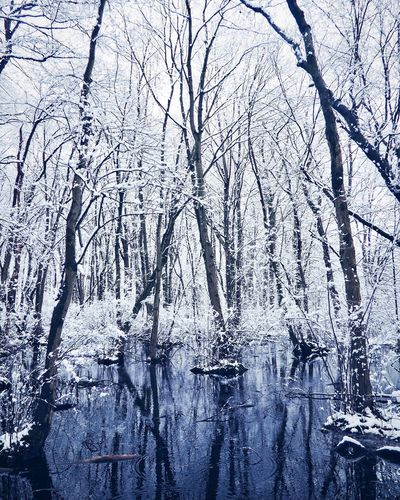Snow makes everything look magical. Snow Bare Tree Weather Tranquility Frozen Water Reflection Peace Outdoors No People Scenics Cold Temperature Beauty In Nature EyeEmNewHere EyeEm Selects