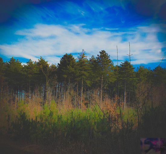 Tree Blue Sky Cloud - Sky Landscape