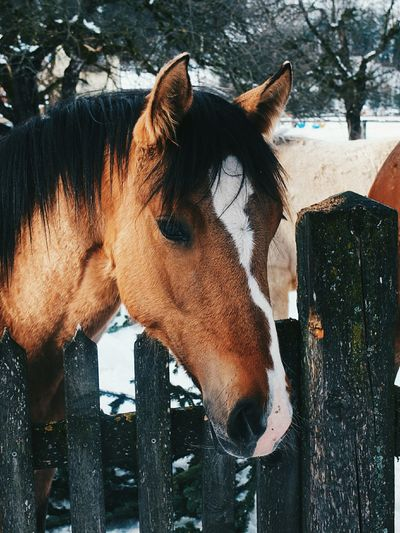 Horses Pony One Animal Nose Beauty In Nature Close-up Horse Winter Outdoors Forest Snow Nature Cold Temperature EyeEmNewHere