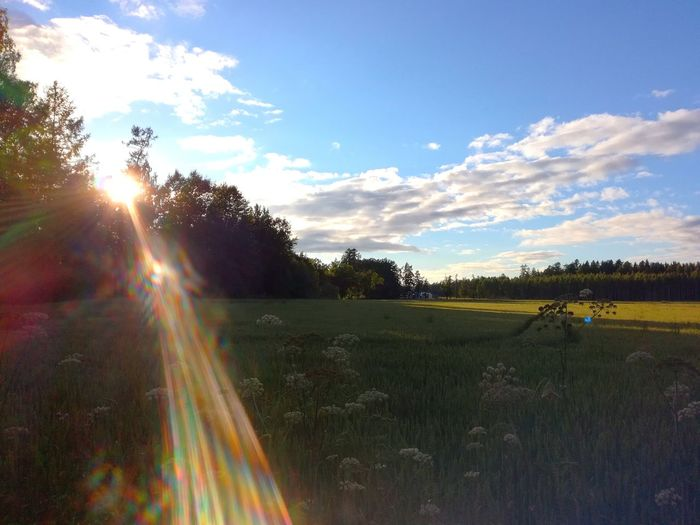 Agriculture Field Cloud - Sky Nature Outdoors Sunlight Sky Beauty In Nature Trees Freshness No People Summertime Evening Sun Finland Forest