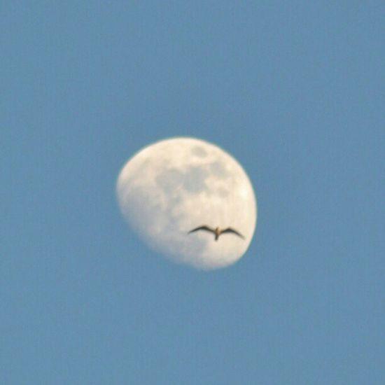 Agadir Maroc the moon right now