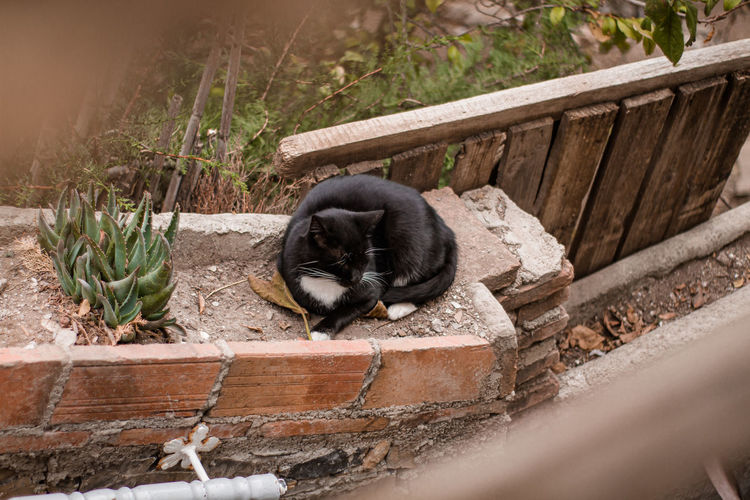 Cat sleeping in a yard
