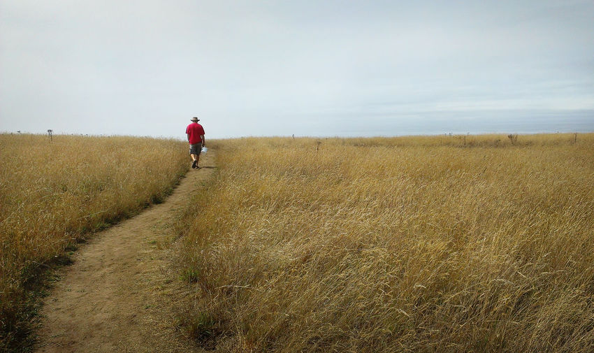 One person walking down a curved path across a golden field of grass towards a blue horizon Mendocino County Beauty In Nature Curved Path Day Environment Field Golden Color Golden Fields Grass Horizon Horizon Over Land Land Landscape Leisure Activity Lifestyles Nature One Person Outdoors Pathway Real People Rear View Red Color Sky Tranquility Walking