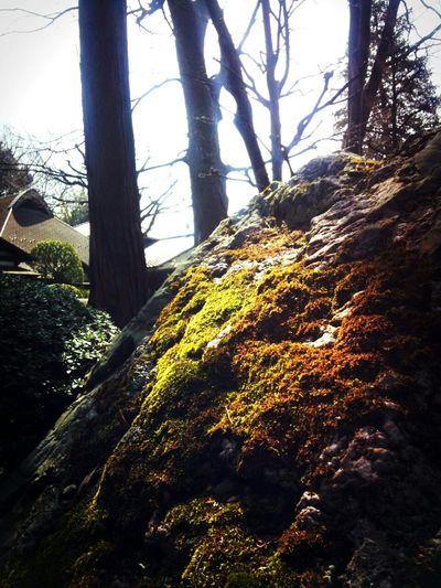 練馬区妙安寺 Temple Moss Green Nature Nerima,Japan
