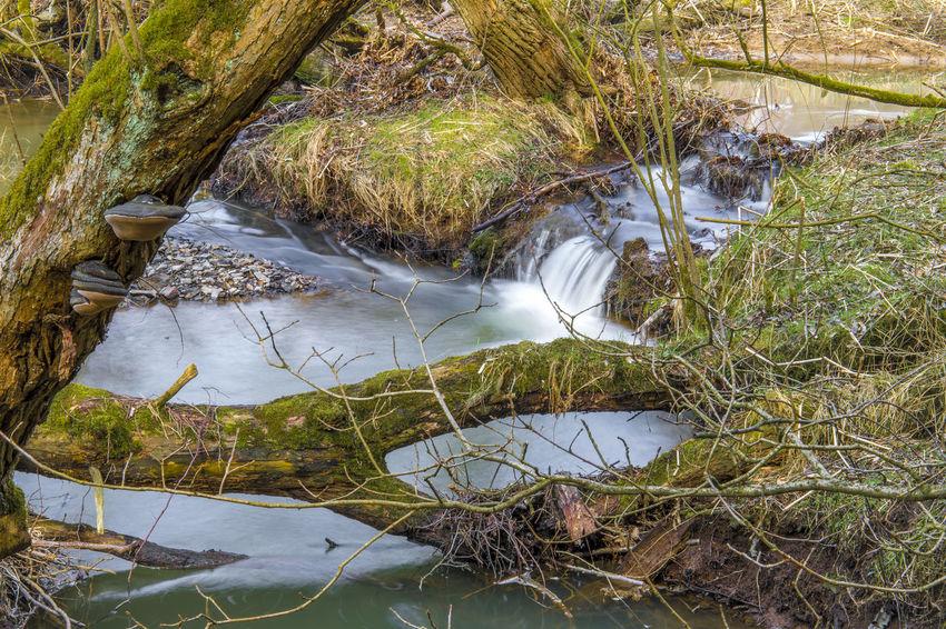 Bach BACH Buchholz Ww Creek Hanfbach Landschaft Nature Beauty In Nature Forest Landscape Landscape_photography Landschaftsfotografie Natur Outdoors Wald Wasser Water Westerwald