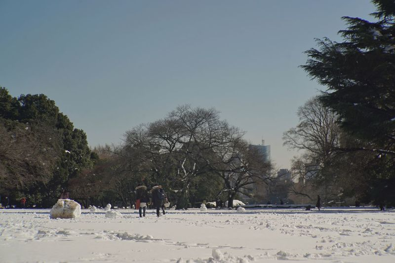 Park Snow ❄ Sky And Trees Park - Man Made Space People Watching people and places Wintertime Landscape Urban Nature After Snowing Day From My Point Of View Enjoying Life Shinjuku Gyoen National Garden 新宿御苑 Tokyo,Japan Winter Snow Cold Temperature Tree