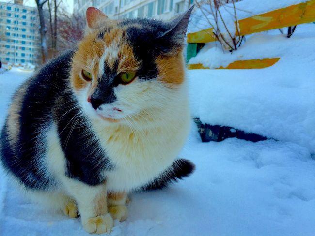 Cat Kitty Cat♡ Cat Lovers Winter Pets Animal Photography Animal кот Коты котэ зима Дмитров