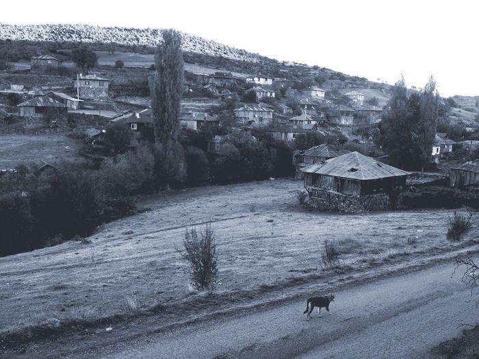 Cold in Village of Geriş EyeEmTurkey . EyeEm Best Shots - Autumn / Fall Autumn Landscape EyeEm Best Shots - Landscape Blackandwhite Black And White Rural Landscape Rural Village Life