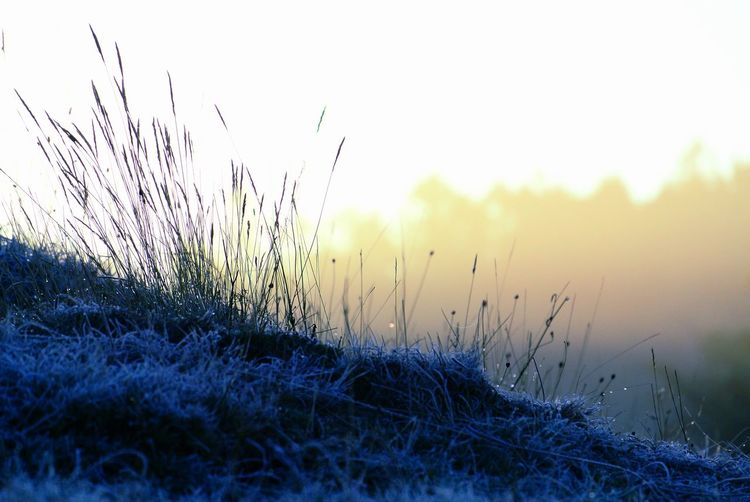 Defocused Water Dawn Winter Fog Sunlight Sky Grass Close-up Dew Foggy