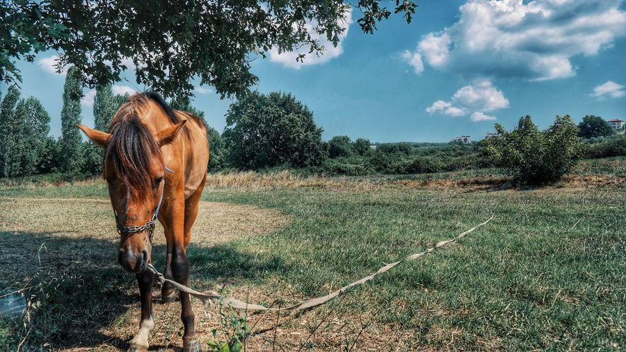 Hanging Out Taking Photos Check This Out That's Me Hello World Cheese! Relaxing Hi! Enjoying Life Yeşil Bursa Turkey EyeEm Best Shots That's Me Bursalovers Bursa Turkishfollowers Turkeyphotos Getting Inspired Eye4photography  Horse Photography  Horse Enjoying Life