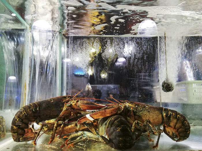 Animal Themes Close-up Day Food Fresh Freshness Indoors  Live Lobster Lobster Lobster In Tank No People Sea Life Seafood Water Wet Market
