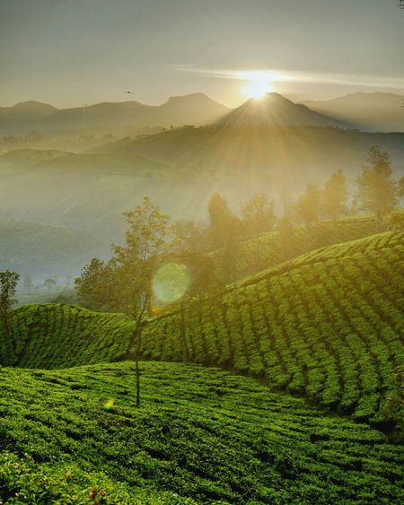 Follow the sun Agriculture Field Rural Scene Farm Nature Landscape Fog Sun Sunlight Beauty In Nature Sunbeam Forest Hill Crop  Freshness Tree Morning Outdoors Growth Scenics EyeEmNewHere Sunrise Folk Sky And Clouds Summer ☀ Be. Ready.