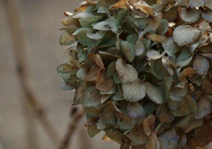 Natural Lover Flower Hydrangea
