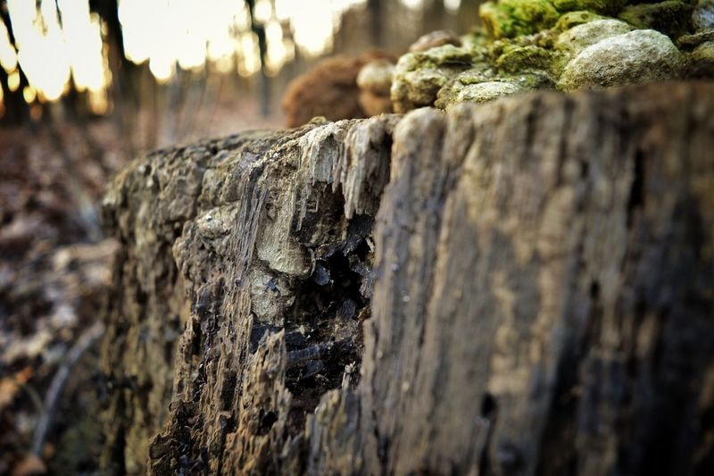Der Verfall Untold Stories Tree Stump Eye4photography  Moshroom Nikon D5200 Nikonphotography Nature On Your Doorstep Nature EyeEm Nature Lover Light And Shadow