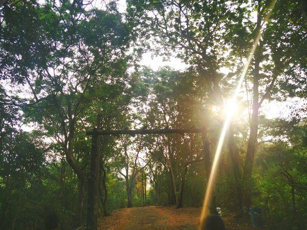 Rays of hope! Sunshine ☀ Sunshine Karnala Karnala Bird Sanctuary Trek Trekking Maharashtra Sahyadris Fort