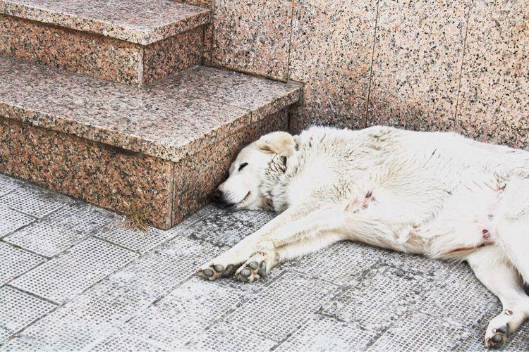 Dog Pets Animal