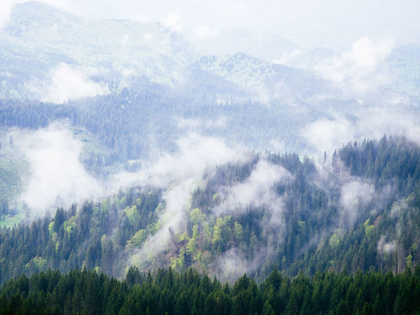 Clouds over the trees #Adventure #Mountain #cloudlovers #clouds  #hiking #hills #rainyday #summer #trekking Beauty In Nature Day Fog Forest Idyllic Landscape Mountain Nature No People Outdoors Scenics Sky Tranquil Scene Tranquility Tree WoodLand