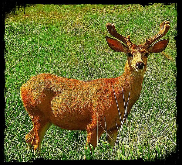 Taking Photos Check This Out Hello World Enjoying Life Colorado Wildlife Buck Beauty Around Me Naturesbeauty One Of The Locals