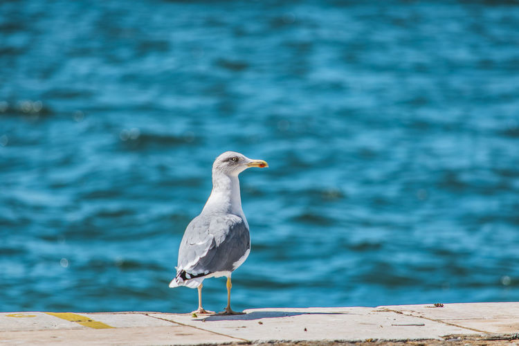 Seagull perching on a beach
