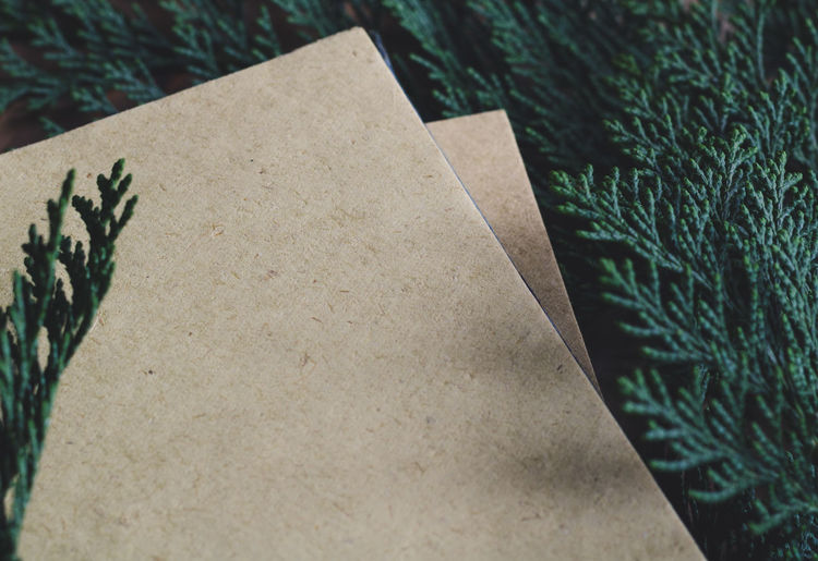 Close-Up Of Blank Papers On Pine Twig