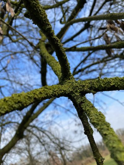Low angle view of lichen growing on tree against sky