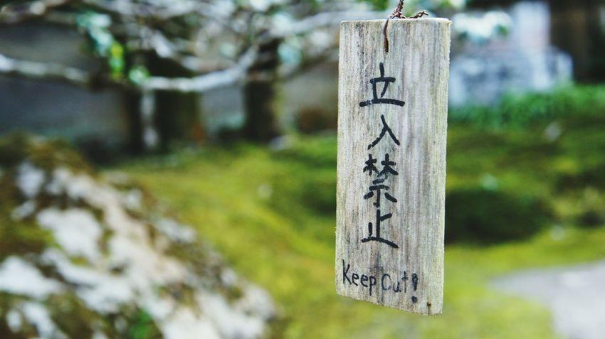 Kyoto Winter 詩仙堂 Close-up