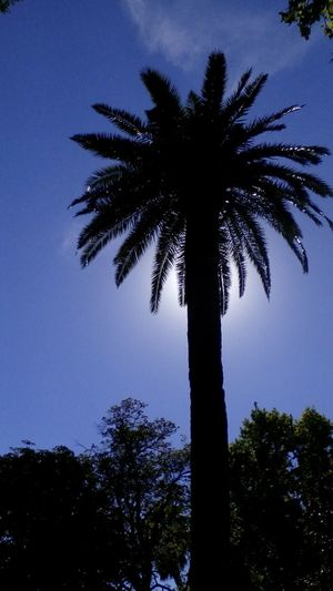 """""""saber es acordarse"""" Walking Around Next To The River Silhouette Hiding The Sun Palm Tree High Blue Sky Nice Afternoon 🌞 Relaxing Moments"""