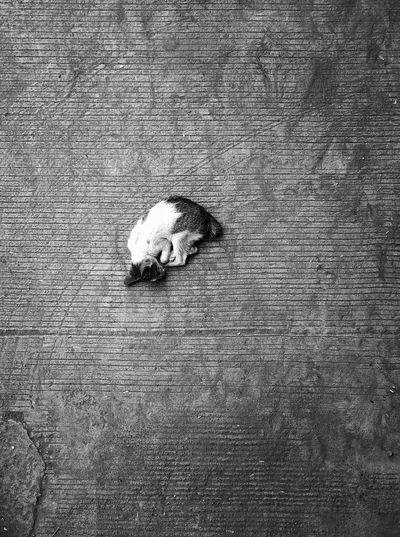 Alone Cat Kitten Textured  Full Frame Close-up