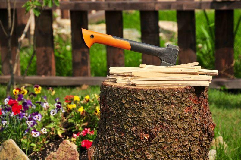 Axe on tree stump in back yard