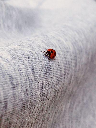 Close-up of ladybug on finger