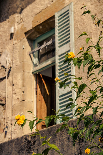 Architecture Blooming Building Exterior Built Structure Day Flower Flower Head Fragility France Freshness Growth Leaf Nature No People Nostalgic  Old Open Outdoors Plant Summer Vintage Window