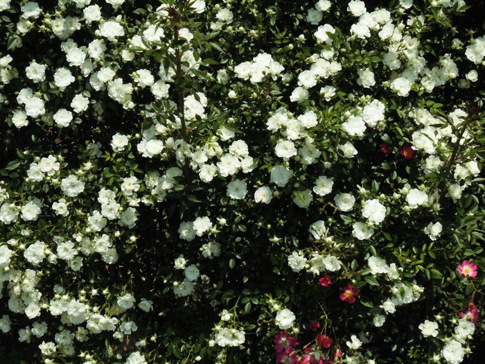 はな 花 はな 白 植物