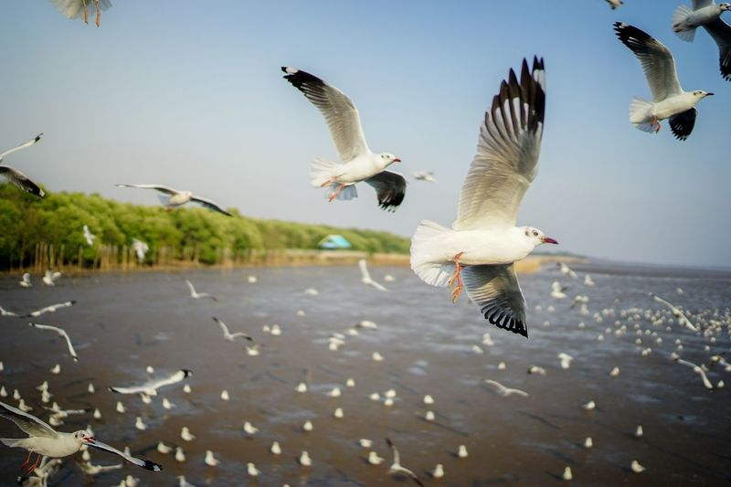 Birds Flying Over River Against Clear Sky