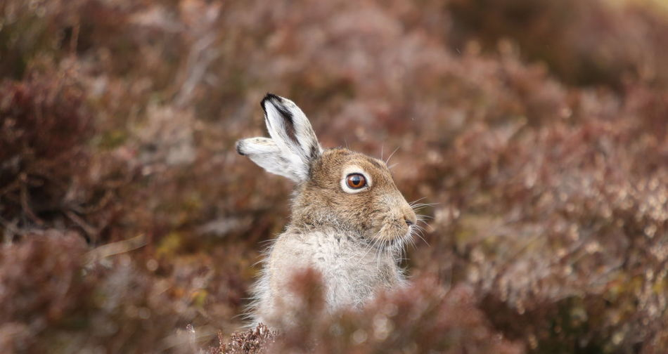 Rabbit amidst plants on field