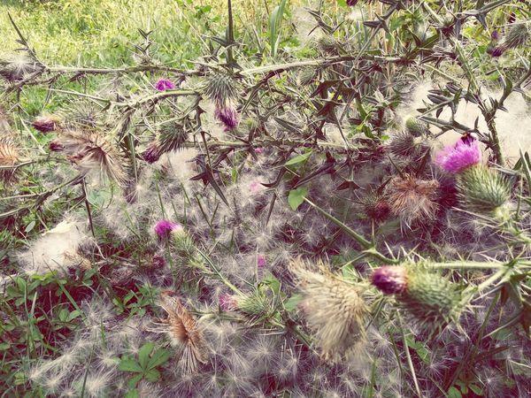 Seeds Summer Green Mobilephotography Purple Flower Backgrounds Full Frame Close-up Plant Grass Stamen