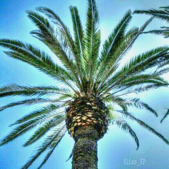 Palm Tree HDR Eye4photography  MyHdrWorld Hdr_Collection EyeEm Nature Lover Nature Trees