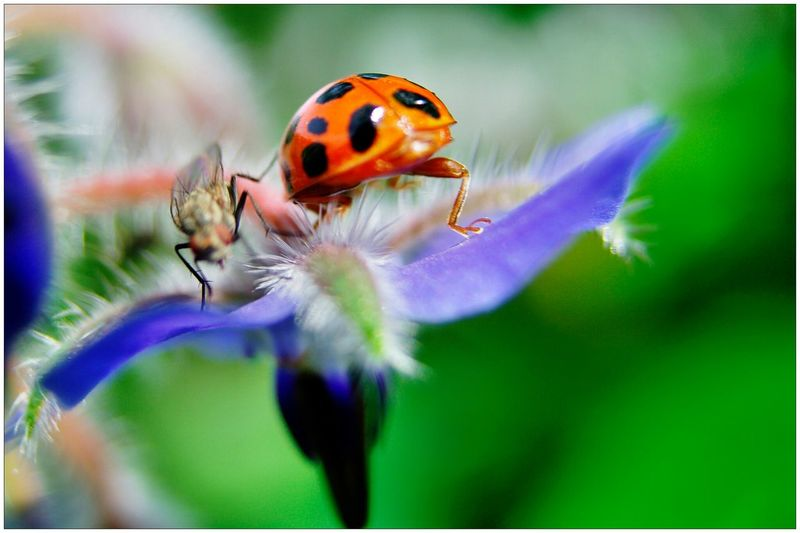 Close-up of insects on flower