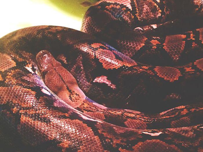 Snake Snakeskin