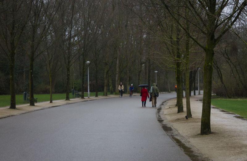 People walking on road along bare trees