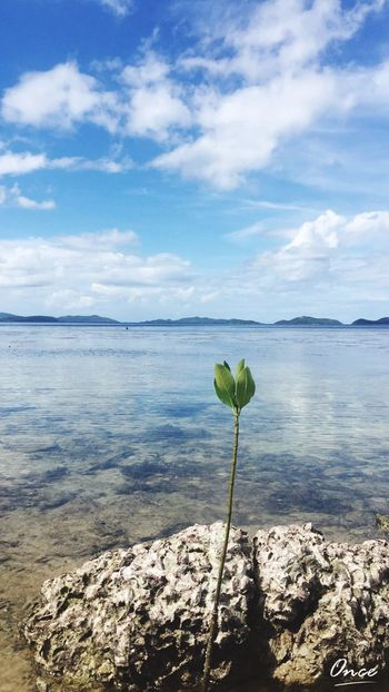 A plant growing in the sea Island Hopping